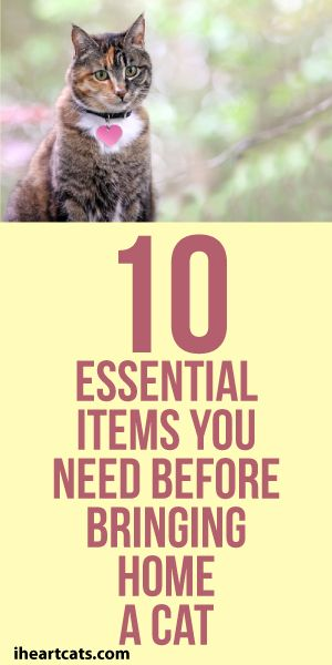 10 Essential Items You Need Before Bringing Home A Cat