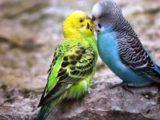 Media Online Yang Menyediakan Informasi Terlengkap Seputar Duni Hewan Jenis Burung