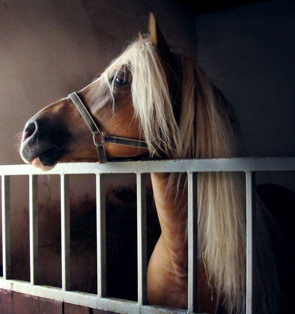 <3: Arabian Hors, Horses Beautiful, Beautiful Animal, Animal Hors, Palomino Horses, Amazing Animal, Beautiful Arabian, Hors Power, Hors Beautiful