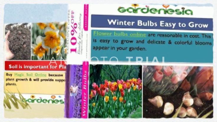If you are planning to fill your garden with flowers then you have to decide what kind of flowers you want to grow, their quality & seeds quality. Solve your problem by purchasing flower seeds online at reasonable cost.