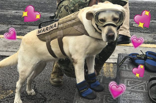Meet Frida, The Dog Who Rescued 12 People In Oaxaca And Won Over Our Hearts