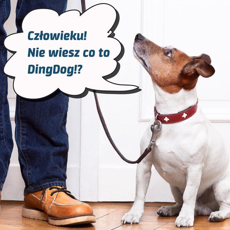 A Ty wiesz czym jest DingDog? #DingDog #pies #dog #spacer #walk