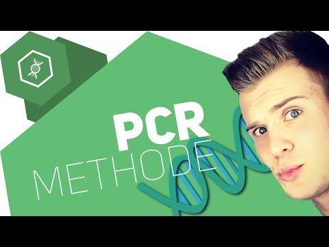 Die PCR-Methode einfach erklärt - YouTube