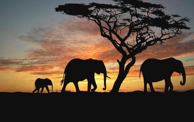 Afrique, savane, arbres, éléphants, nuit, coucher de soleil, animaux nature, Afrique Wallpaper