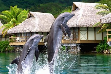 InterContinental Moorea Resort and Spa - Moorea, Tahiti - Luxury Hotel Vacation from Classic Vacations