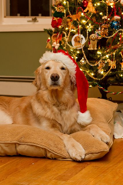561 Best Christmas Pets Images On Pinterest Christmas