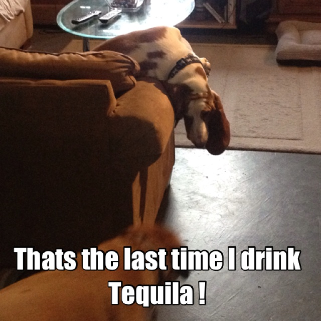 My dog acting like he has a hangover LOL