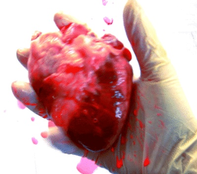 2nd February    Heart for hearts sake    by 15folds    What will you do with yours this month?  #gif #15folds #heart #glove