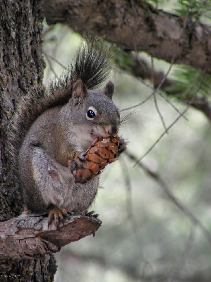 Meet Singles From Squirrel