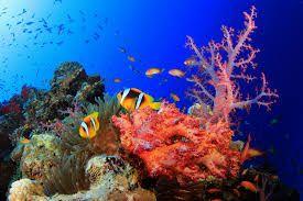 fond marin - Recherche Google