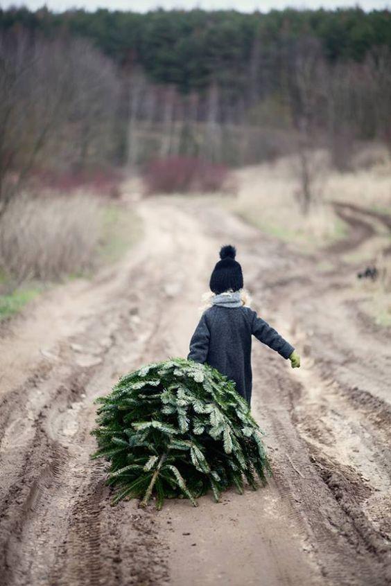 This-Christmas-Blog : Photo