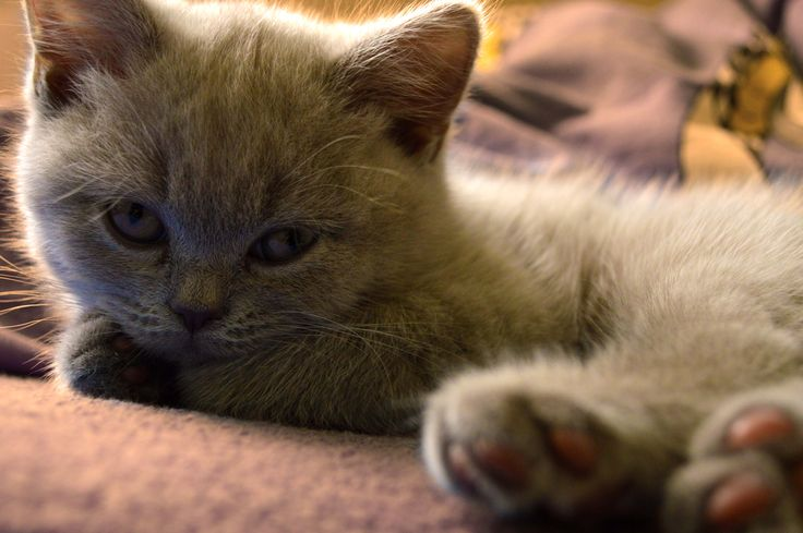 Kitten:)