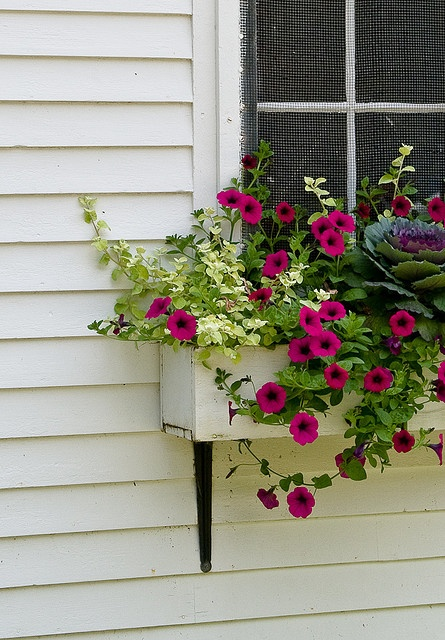 Great Combination Of Color Window Box Into My Soul