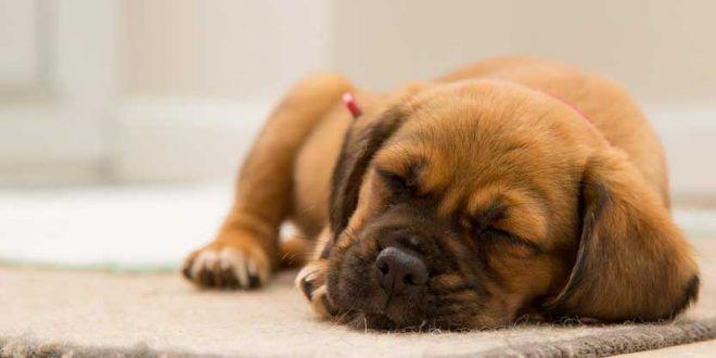 Dog images cute | dog images free download