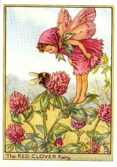 Red Clover Flower Fairy