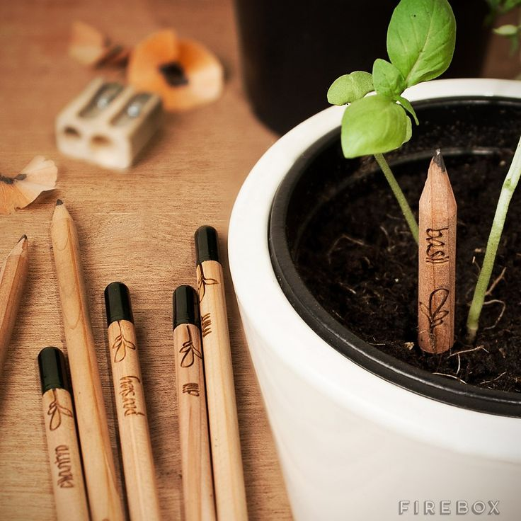 Cutest thing ever! Sprout Pencil – $20 Use your pencil as usual, but when it becomes to short to use you plant it in a pot and water it and a plant with grow from the bottom : )  (gadgets, ideas, inventions, cool, fun, amazing, new, interesting, product, design, clever, practical, useful, gizmo, brilliant, genius, herbs, recycling)