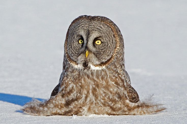 Unravel a bit of the mystery of owls.  What makes owls so quiet and so deadly? feathers