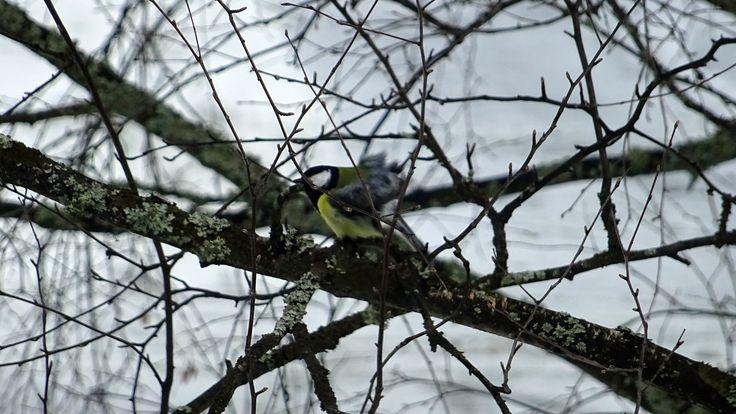 Shot this little bird from my kitchen window.