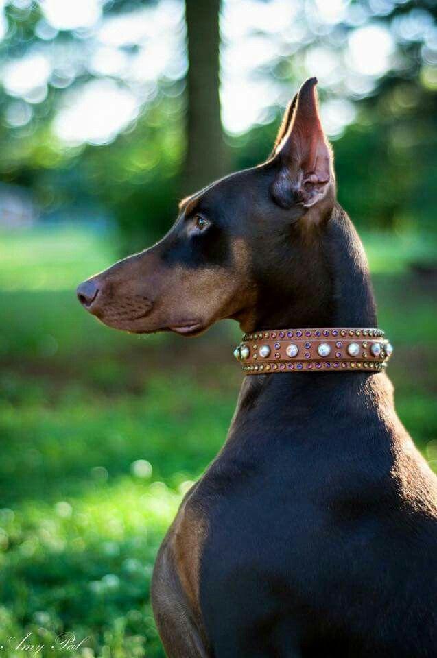 German Dog Collars Uk