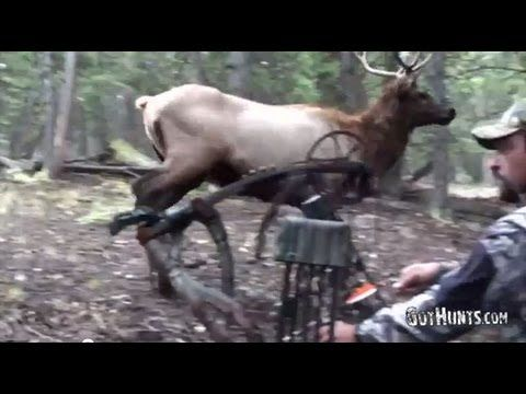 Cool #huntingvideos http://gothunts.com/videos/