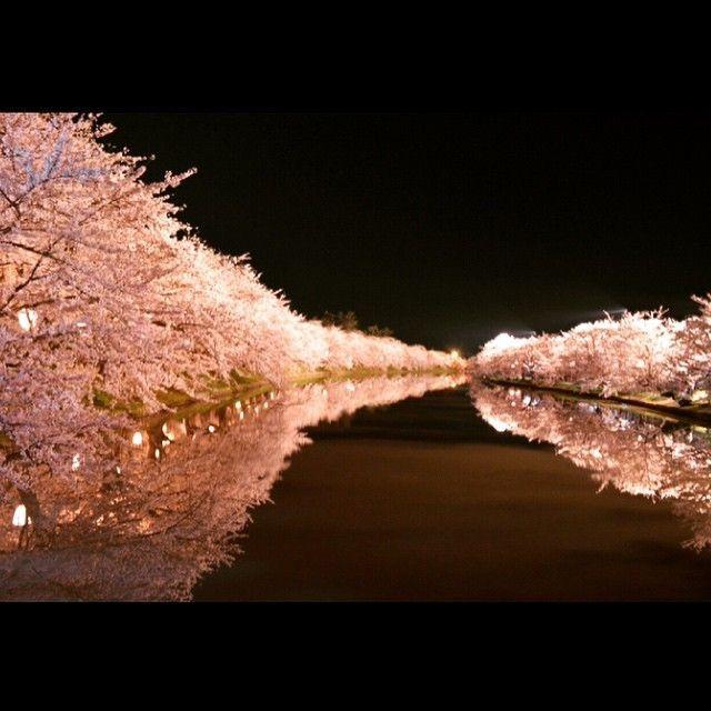 日本人なら見ないと恥「桜のプール」