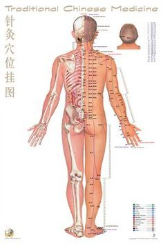Traditional Chinese Medicine: Acupoint Chart Back View. Poster for same at link below