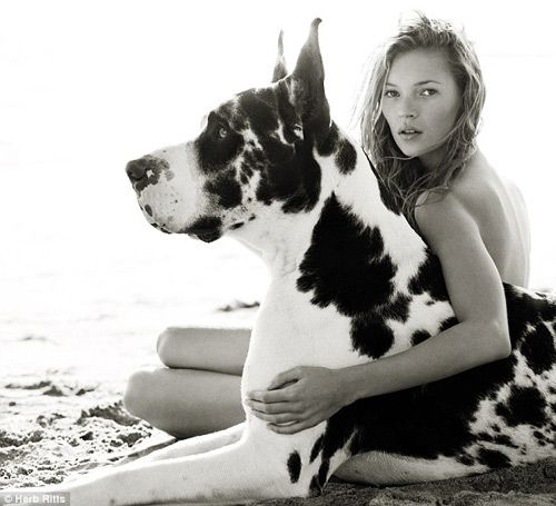 Kate Moss + harlequin Great Dane  Herb Ritts, 1997