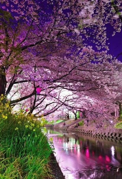 Purple hued river