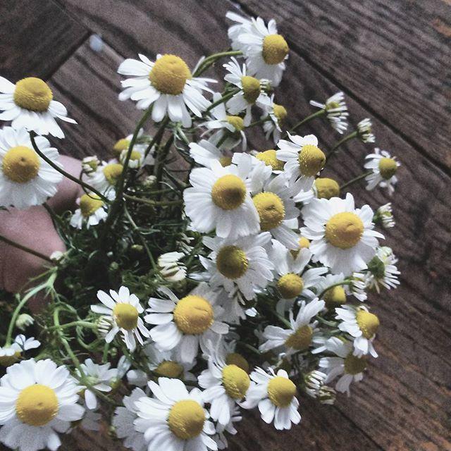 #rumianek#flowers #flowerlover #simpledecor #simplebeauty #homeinspiration #scandi_look #tv_living#wood #wooden #natura #nature #natural #deska #naturelovers#photooftheday #beautiful #love #vscocam #minimalism #minimallife #monochromatic #monochrome#almostperfect_vintage