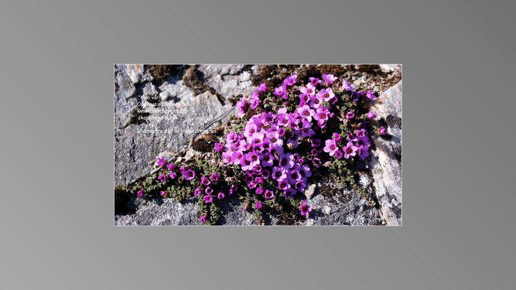 Vi har fått noen fine bilder fra den fotograferende diktleseren Anne-Lise Simmersholm fra Sandsøya og Harstad. Bildene gjengir vi med tillatelse fra fotografen, sammen med Helge Stangnes sitt dikt …