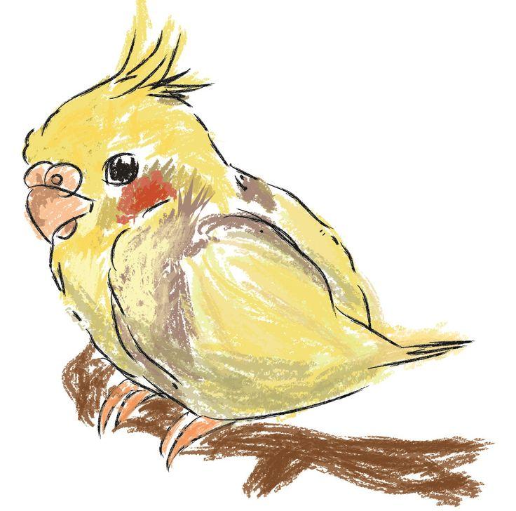 Piccola Calopsita  #calopsita #parrot #parrots #draw #digitaldraw #disegnodigitale #disegno #illustrazione