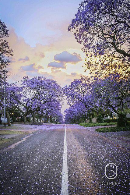 Pretoria in October #jacaranda http://www.n3gateway.com/the-n3-gateway-route/bbapt.htm