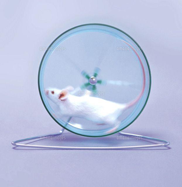 ハツカネズミ 車輪 - Google 検索