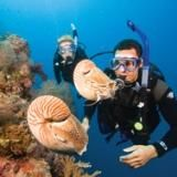 Planning on getting my Advanced Open Water PADI certification when I'm back on the coast. Can't wait!!