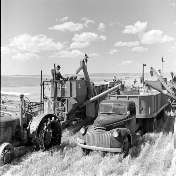 STRANGE OLDE FARM HARVESTING EQUIPMENT - WHEAT COMBINE PULLED BY TRACTOR - NOTE NO TIRES JUST METAL SPIKES - FARM TRUCK FULL OF WHEAT!