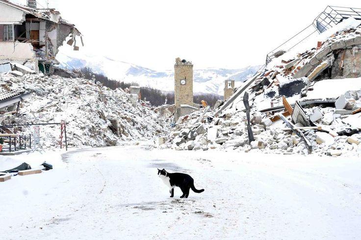 Il gelo e la neve hanno ricoperto l'Italia in questi primi giorni del nuovo anno. Dal freddo di Milano, alcuni pensieri su persone, animali e clima. Questo inizio di anno mi ha stupito per l&…