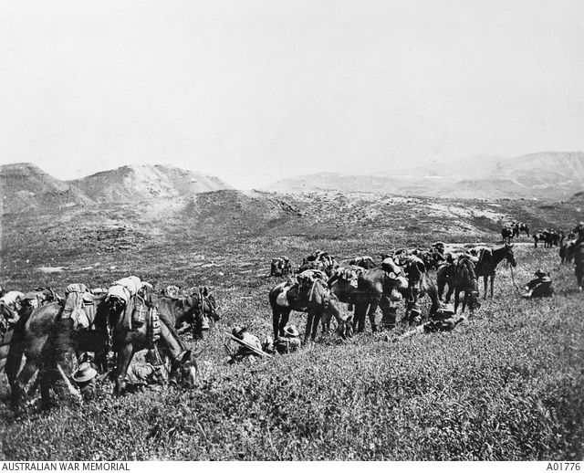 Men and horses of possibly the 1st Australian Light Horse Brigade taking a quick…