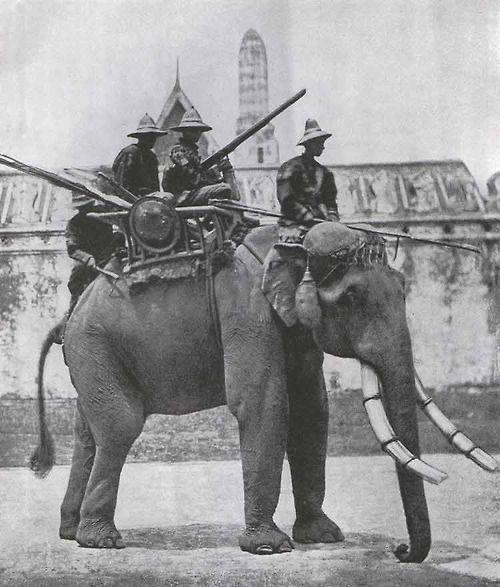 "peashooter85: ""Siamese war elephant, 1866 "" hell fucking yes"