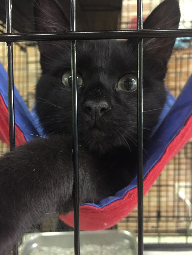While on vacation I found a thrift store that works with the local SPCA and fosters some kittens there. This guy was playing with my phone.