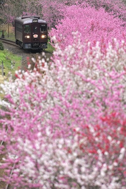 Watarase Railways, Gunma, Japan わたらせ渓谷鐵道