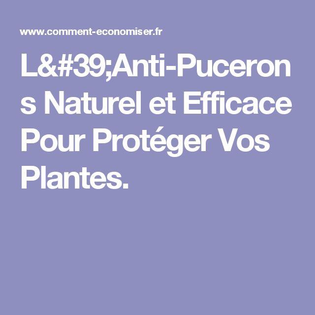 Les 25 meilleures id es de la cat gorie puceron sur - Anti puceron naturel ...