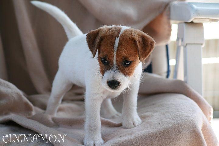 Baby Cimmon
