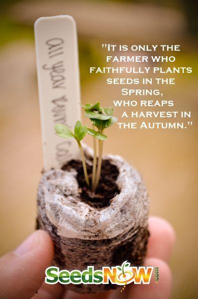 Image Result For When To Start Vegetable Garden Seeds
