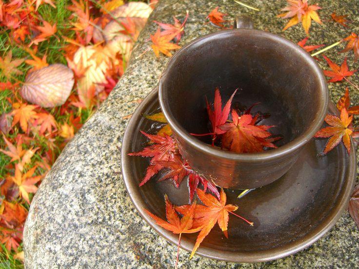 Autumn Detox Teas @RadiciYoga