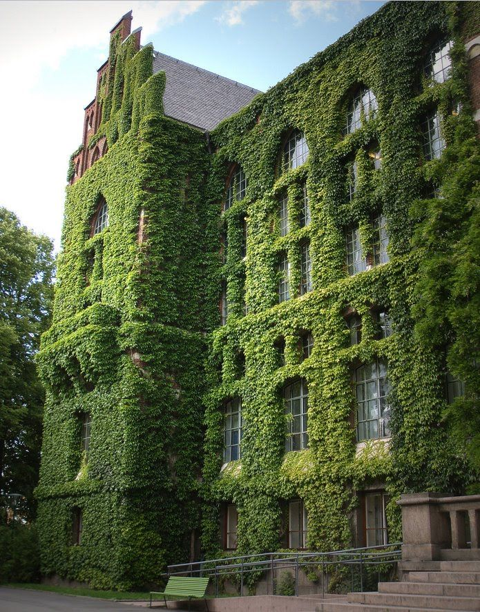 Ivy covered library in Sweden - Main Library, Lund University