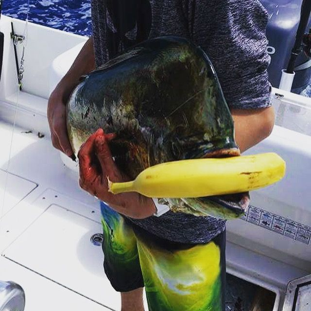 Over the years, many of them have made their way inland to the rivers and trout streams of the Colorado Rockies. One of the more common and also misunderstood superstitions is this: it is bad luck to take a banana with you onto a fishing boat of any kind. I am writing this because I .