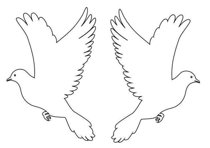 thumbnail of güvercin 1