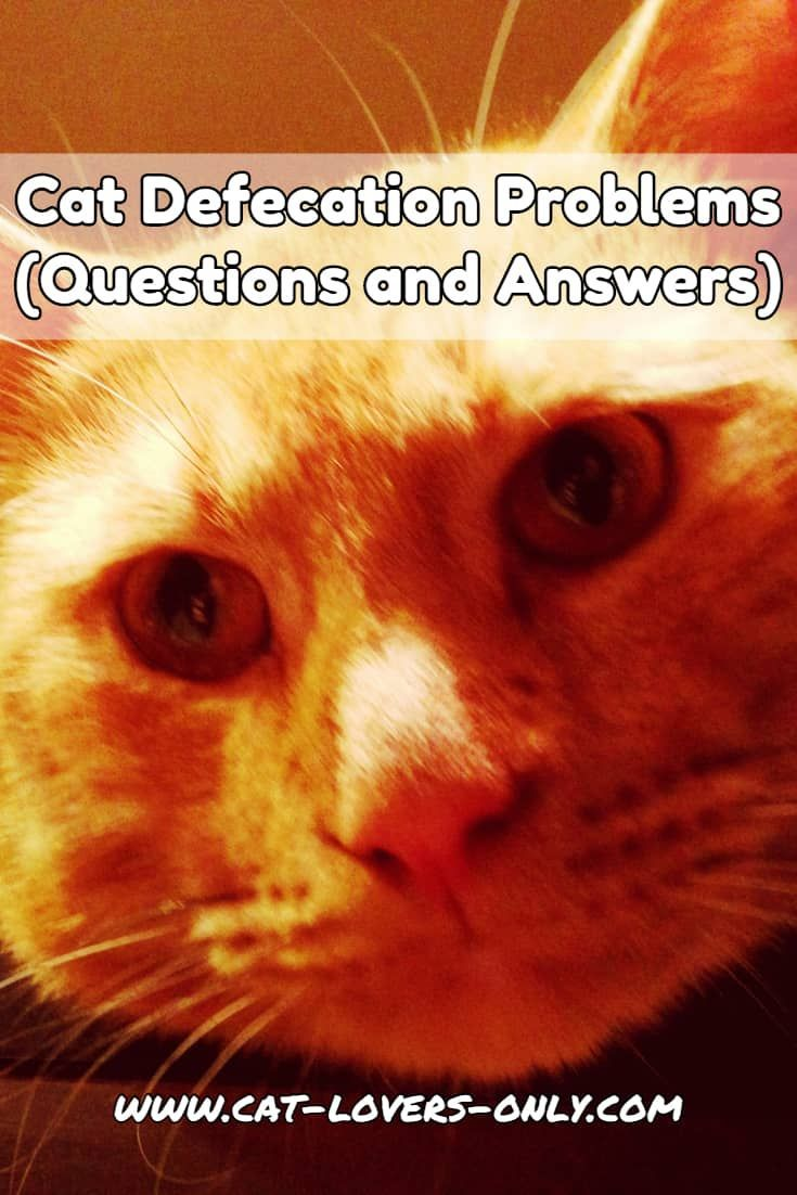 Cat Defecation Problems Questions And Answers Cat Behavior Problems Inappropriate Cat Cats