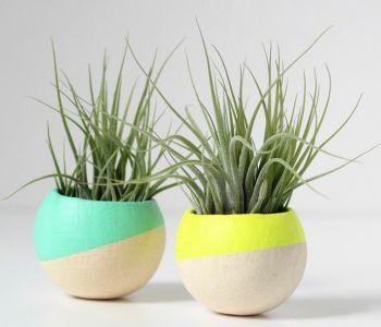 Dipped pots random macetas macetas de cemento y - Macetas para interiores ...
