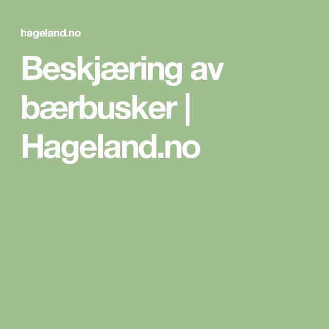 Beskjæring av bærbusker | Hageland.no